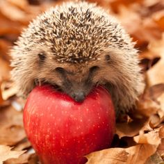 Keep everybody's favourite garden visitor safe this Bonfire Night with these simple tips from Kate Patten