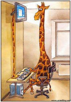 Proper posture when looking at the computer makes all the difference! Giraffe at… Funny Giraffe Pictures, Funny Pictures, Chiropractic Humor, Chiropractic Center, Chiropractic Office, Funny Animals, Cute Animals, Giraffe Art, Giraffe Humor