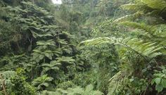 Nyungwe Forest National Park, Rwanda - Photo from Facebook Fan page