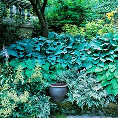Blue-green hostas and Japanese painted ferns provide subtle color in a deeply shaded area.