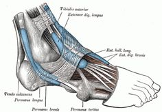 Using Myofascial Release to Treat & Prevent Plantar Fasciitis and Shin Splints mobility exercises physical therapy Tendonitis Causes, Tendinitis, Ankle Pain, Heel Pain, Peroneus Longus, Ankle Exercises, K Tape, Running Injuries, Running Feet