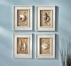 1000 Ideas About Sea Shell Framed On Pinterest