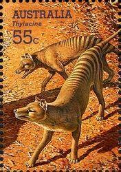 Australian stamp--Thylacine--Tasmanian Tiger (now extinct)