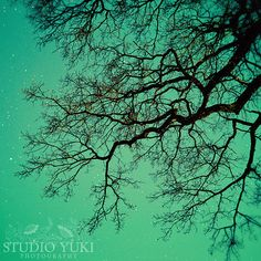 Tree Photo Magical Surreal Fine Art Photography by StudioYuki, $30.00