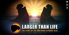 LARGER THAN LIFE, THE STORY OF THE NORTHERN ELEPHANT SEAL A history of the northern elephant seal, a species that narrowly escaped extinction thanks to the preservation efforts of Mexico and the United States. To buy tickets: http://www.brownpapertickets.com/browse.html?keywords=wcff