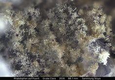 Rhabdophan auf Fluorit  Clara Mine, Rankach valley, Oberwolfach, Wolfach, Black Forest, Baden-Württemberg, Germany Copyright © Stoya