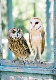 Two Owls. Film Photo Stocksy United – Royalty-Free Stock Photos – Owls by Milles Studio
