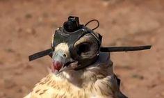 Falcon Eye - Abu Dhabi