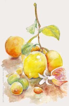 Fruit made with watercolour pencils - Elena Nazzaro