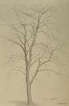 Love trees like this for Art