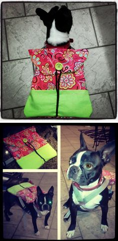 Easy sew dog backpack to carry treats and toys to the park. #dogbackpack #bostonterrier