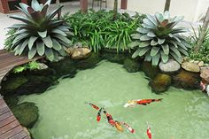 outdoor garden with fish pond. I would make this into a plunge pool