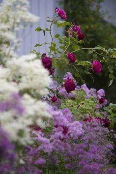 Enchanting garden!