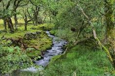 Image result for woodland stream
