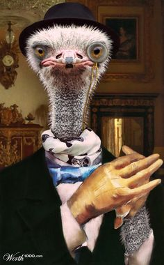 Dandy Ostrich by PixJockey 8th place entry in Animal Renaissance 16-Worth1000