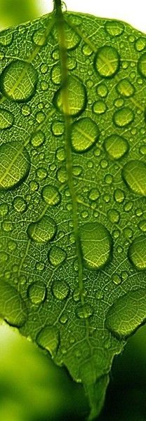 """water drops on a green leaf - follow the link to a great """"colors"""" site with shoes!  baenk.com"""