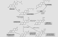 A koleszterin (dr. Légrády Péter) :: EGÉSZSÉG-HAZUGSÁGOK Map, Location Map, Maps