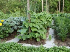 uborka ágyásban Gardening Tips, Cucumber, Plants, Gardens, Food, Potato, Tips, Meal, Essen
