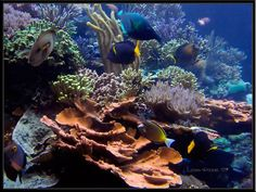 Best tanks from around the world. - Page 6 - Reef Central Online Community Cool Tanks, Fish Tank, Aquarium, Around The Worlds, Community, Pets, Animals, Goldfish Bowl, Fishbowl