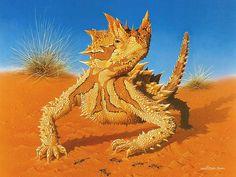 Australian Thorny Devil by Richard McKenna A beautiful & harmless little lizard