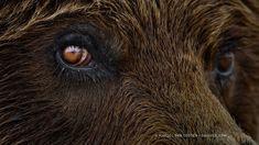 Photograph Eye To Eye by Marsel van Oosten on 500px #darleytravel