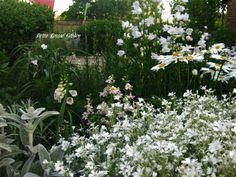 Petra Rosso' Garden. White flower bed. Spring