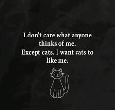 don't care what anyone thinks of me. Except cats. I want cats to like me. I Love Cats, Cute Cats, Funny Cats, Crazy Cat Lady, Crazy Cats, Allergic To Cats, Gatos Cats, All About Cats, Quotes About Cats