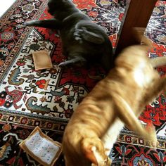 They are new friends of Fido the Cat from Etsy. They are going nuts over their new catnip toaster tarts. | Handmade by Fido the Cat