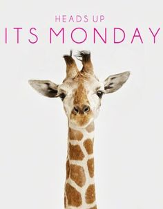 Good Monday Morning to you! A lil Giraffe humor. Q: What do giraffes have that no one else has? A: Baby giraffes! Montag Motivation, Monday Humor, It's Monday, Hello Monday, Happy Monday Quotes, Funny Monday, Monday Motivation Quotes, Monday Blues, Weekday Quotes