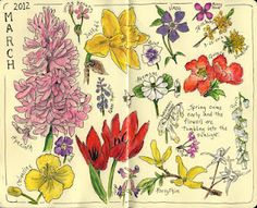 Each month, a page or two for flowers in bloom  #journal #sketch #nature