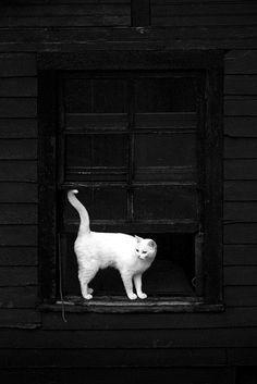 Noir et blanc chat