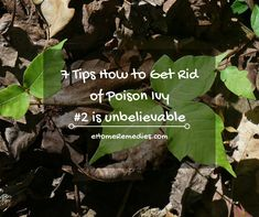 7 tips how to get rid of poison ivy