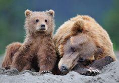 Russian wildlife photographer Nikolai Zinoviev.