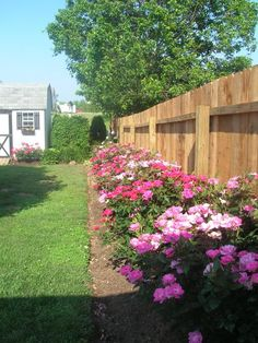 knock out roses - beautiful where ever you plant them.