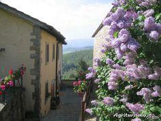 Detail of Borgo Tramonte Casentino Tuscany Italy. Fioritura del Lillà a Borgo Tramonte www.borgotramonte.it Plants, Italia, Plant, Planets