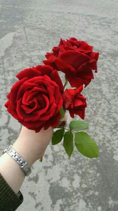To Buy Flowers For Valentine's Day Rose Flower Photos, Love Rose Flower, Rose Pictures, Beautiful Rose Flowers, Flowers For You, Flower Images, Love Flowers, Wallpaper Nature Flowers, Rose Flower Wallpaper