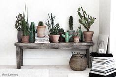 stilleben-med-fejk-kaktus1