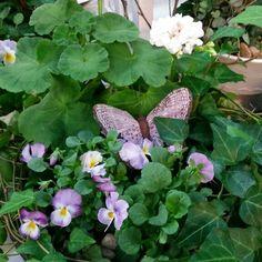 Fjärilsvingar med pense och pelargon. En Hultagrupp som det lyser vår om. Japp, nu är våren äntligen här! #lillahultsblommor #hultagrupper