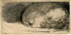 "Library Puts Hundreds of Rembrandt Etchings Online Rembrandt Harmenszoon van Rijn, ""Sleeping Puppy"" (c. etching, 39 x 81 mmRembrandt Harmenszoon van Rijn, ""Sleeping Puppy"" (c. etching, 39 x 81 mm Rembrandt Etchings, Rembrandt Drawings, Rembrandt Art, Chiaroscuro, Selfies, Sleeping Puppies, Dutch Painters, Dutch Artists, Animal Paintings"