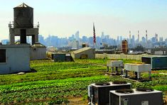 Brooklyn Grange is the World's Largest Rooftop Farm! | Inhabitat - Green Design, Innovation, Architecture, Green Building