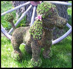 Poodle Garden Topiary Frame