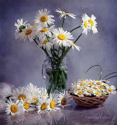 цветы ромашки - 19