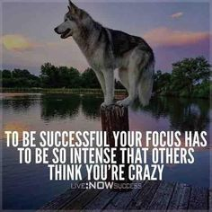 Click the pin to check out success story! Inspiration is Motivation Chase Your Dreams Style Estate Wolf Quotes, Me Quotes, Motivational Quotes, Inspirational Quotes, Qoutes, Rich Quotes, Passion Quotes, Life Quotes Love, Great Quotes