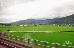 窗外的翠綠稻田