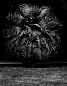 Geert Goiris, Trope, 2013. Courtesy Gallery Art: Concept, Paris & the artist.