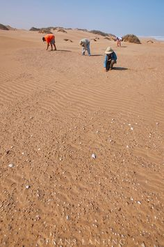 Searching for gemstones, Sperrgebiet National Park, Namibia