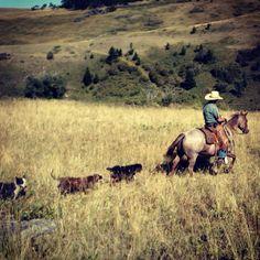 A cowboy and his crew #montanaranchlife