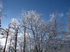 After a freezing rain storm, Mount Vernon, Prince Edward Island