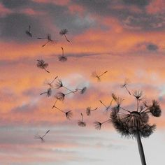 dandilion. Want this as a tattoo   I can totally see this as a tattoo.
