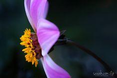 Profile - Dahlia Gardens by the Bay, Singapore